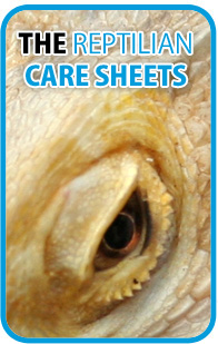 The Reptilian Care Sheets - Snake Care, Lizard Care, Tortoise Care, Turtle Care, Invertebrate Care and more...
